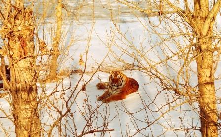 tigreetarbres.jpg
